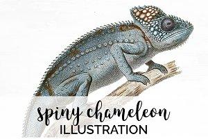 Chameleon Spiny Vintage Lizard