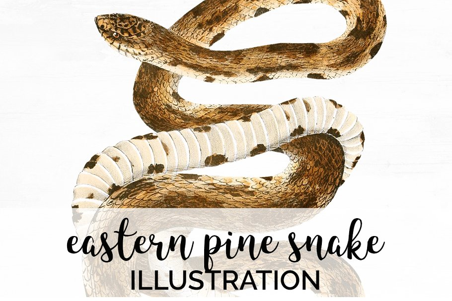 Snake Eastern Pine Watercolor ~ Illustrations ~ Creative Market