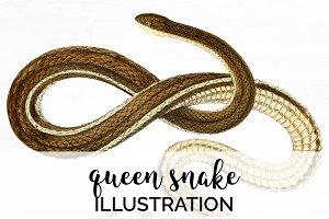 Queen Snake Vintage Watercolor