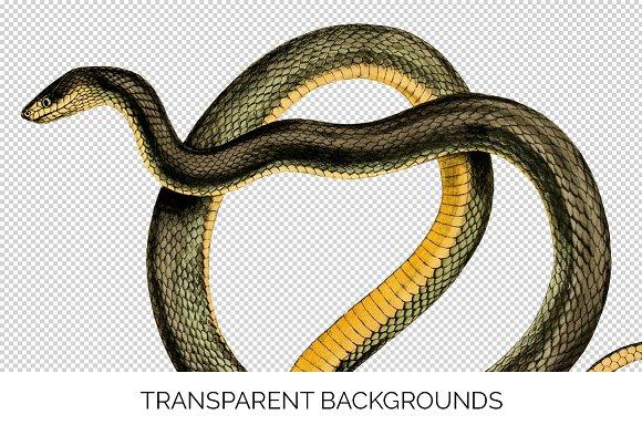 Snake Forest Flame Vintage Snake