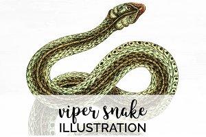Viper Snake Vintage Watercolor