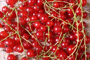 Macro berries, red currant