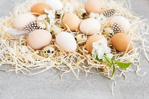 Nest with chicken and quail eggs