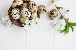 Nest with quail eggs