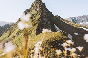 Summer mountains Landscape flowers