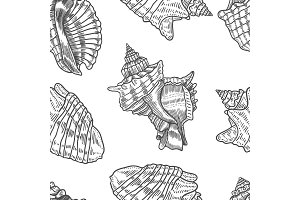 Seashells vector seamless pattern.