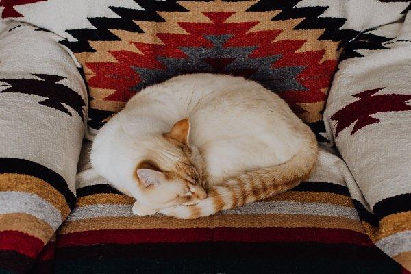Animal Stock Photos - Cozy Winter Cat