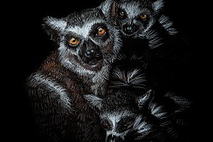 Lemurs family pencils drawing