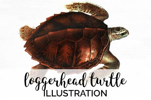 Loggerhead Turtle Vintage Watercolor