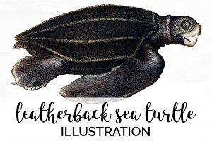 Sea Turtle Leatherback Vintage