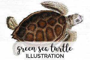 Green Sea Turtle Vintage Reptile