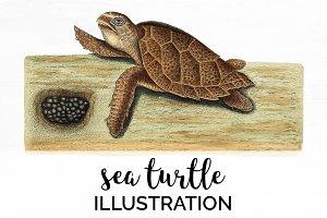 Hawksbill Vintage Sea Turtle