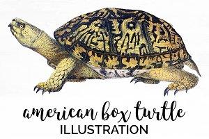 American Box Turtle Vintage Reptile