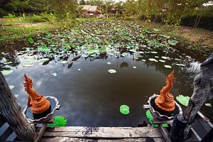 Beautiful pond with lotus in Thailan