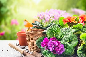 Gardening setting in garden