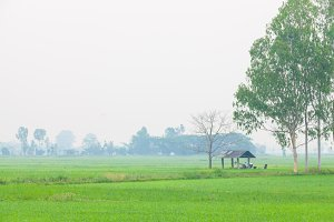 Cottage in the middle of rice fields