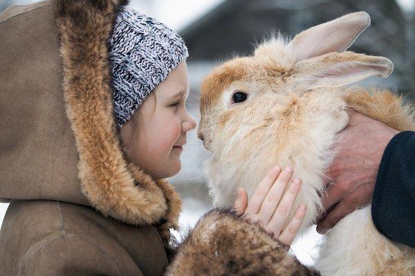 Animal Stock Photos: Kozorog - Acquaintance of a little girl and a