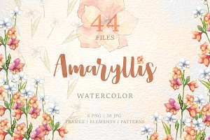 Amaryllis flowers Watercolor png