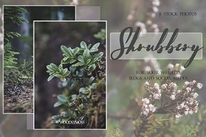 Shrubbery - Stock Photos