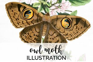 Owl Moth Butterfly Vintage Insect