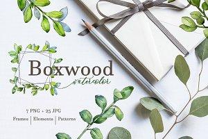 Boxwood Watercolor png