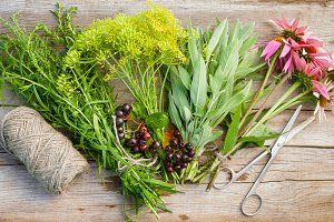 Bunches of healing herbs