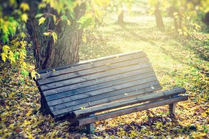 Old bench in sunny autumn park