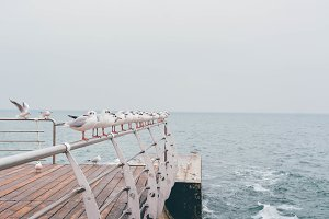 Row of seagulls at the winter sea
