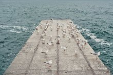 Seagulls on a concrete on the sea