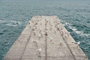 Seagulls on a concrete on the sea