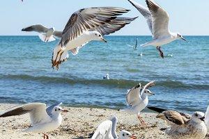 flock of seagulls on the beach
