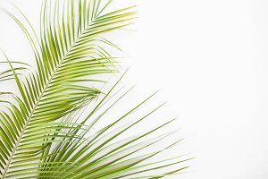 Summer Vibes Styled Stock Photo 014