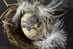 Eggs in nest and white feathers.