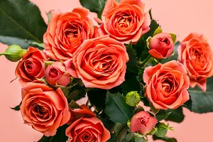 Bouquet of beautiful coral roses on