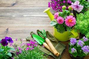 Seedlings of garden flowers in pots.