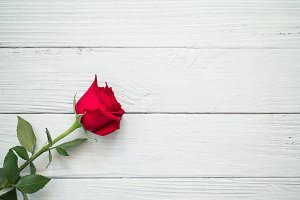 One rose on white wooden background