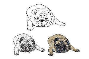 Lying pug dog