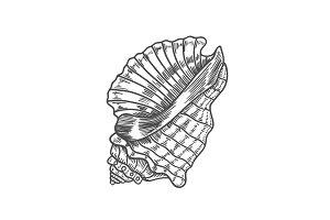 engraving illustration of spiral