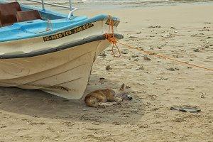Dog sleeping in shade of boat