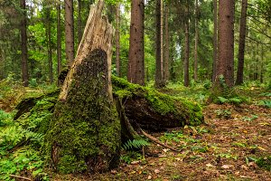 Forest landscape. Summer season