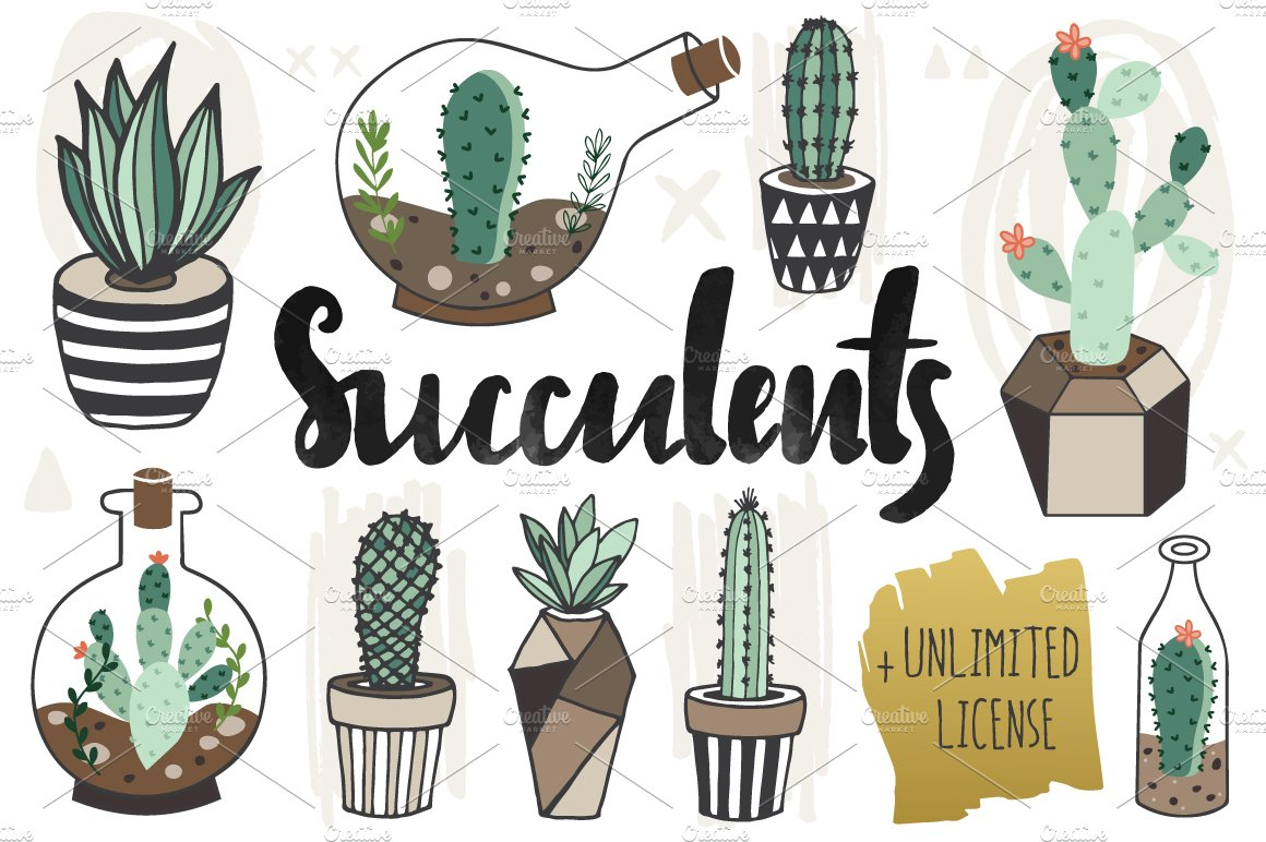 75 Off Succulents Unlimited License Illustrations