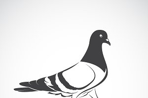Vector of Pigeon design. Bird Icon.