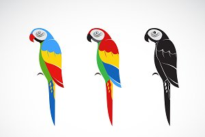 Vector of a parrot design. Bird Icon