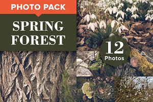 SPRING FOREST (12 Premium Photos)