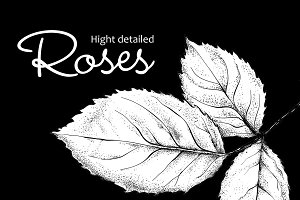 Very detailed handdrawn roses
