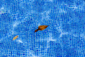 pool water holiday