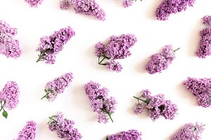 Pattern made of lilac flowers