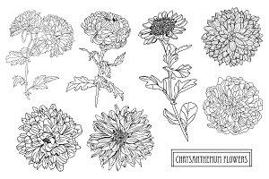 Chrysanthemum Flowers Set