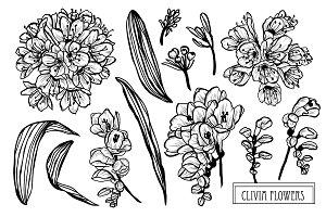 Clivia Flowers Set