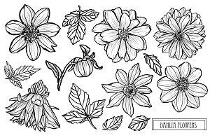 Dahlia Flowers Set